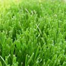 Soccer Grass (Mainland China)